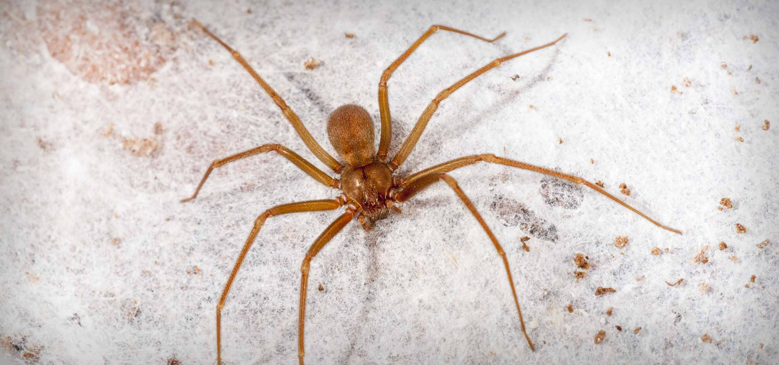 Spider Exterminator | Spider Control Services | Black Pest Prevention