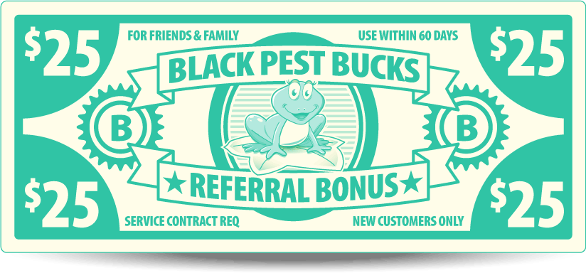 Pest Control Deals | Black Pest Prevention Specials | Charlotte Area